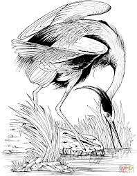 great blue heron fishing coloring page free printable coloring pages