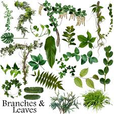 branches and leaves resource by rain gear on deviantart