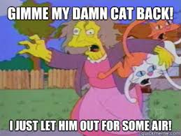 Crazy Cat Lady Memes - gimme my damn cat back i just let him out for some air crazy