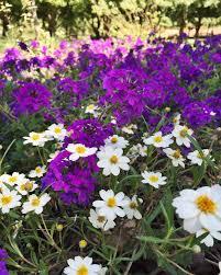 blackfoot native plants plant sale u2014 texas discovery gardens