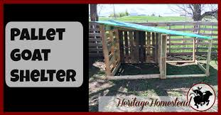 diy easy free goat house with pictures a life of heritage