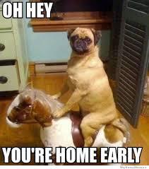 Sick Puppy Meme - 25 funny dog memes