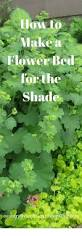 native florida plants low maintenance best 25 low maintenance shrubs ideas on pinterest low