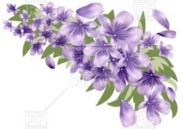 lavender flowers lavender flower with leaves royalty free vector clip image