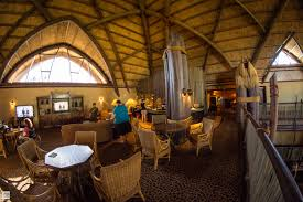 kilimanjaro club at disney u0027s animal kingdom lodge