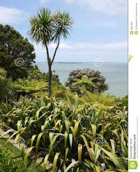 nz native plants list new zealand garden with native plants royalty free stock photos