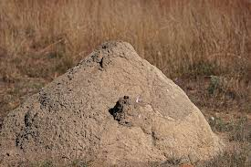 soil mound of an ant hill free stock photo public domain pictures