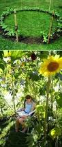 grow a sunflower house for the kids to play in 31 cheap and