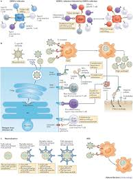 new insights into the immunopathology and control of dengue virus