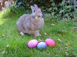 bunnies for easter 6 things to do in dallas for easter weekend d magazine