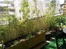 balkon bambus sichtschutz bambus als balkon sichtschutz ideen mit pflanzen matten und stangen