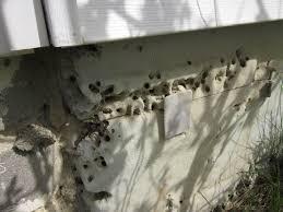 Spray Insulation For Basement Walls Coping With Termites And Carpenter Ants Greenbuildingadvisor Com
