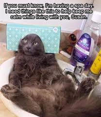 Funny Cat Memes - funny cat meme dump album on imgur