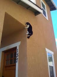 Sneaky Cat Meme - 31 sneaky ninja cats that have mastered the ancient art of ninjutsu