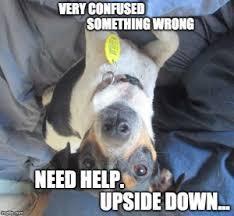 Confused Dog Meme - meme doge vs my meme dog lila edition 1 the odd giraffe