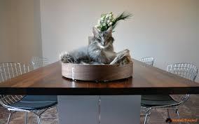Ikea Cuccia Cane by Cucce Per Gatti Ikea Best Indiana Jones Cat Bridge With Cucce Per