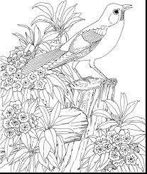 fantastic advanced coloring pages with coloring pages