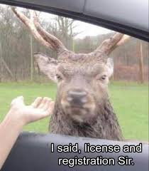 Funny Deer Memes - 22 funny animal memes and pictures of the day funny animals