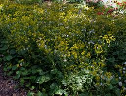 native plants of maryland montgomery county gardeners go native to combat excess moisture in