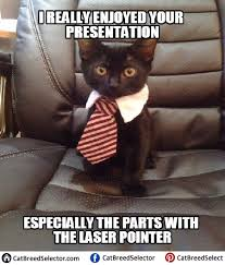 Lawyer Cat Meme - business cat memes funny cute angry grumpy cats memes pinterest