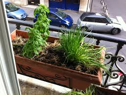 Window Sill Planter by Add More Green Window Garden In Paris