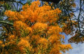 flowers steven gersbach fine art photography l australian