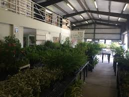 maui native plants native plant sales statewide in celebration of arbor day big