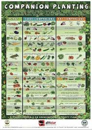 chic companion planting vegetable garden 1000 ideas about