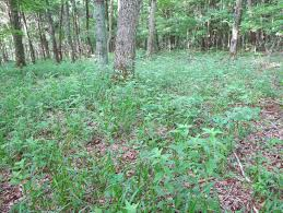 native plants ohio blue jay barrens june 2014