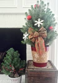 decorating with live mini sized trees at home
