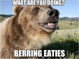High Koala Meme - figured you needed your meme s in bear form album on imgur