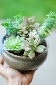plants that don t need sunlight to grow 21 plants that don t need sunlight to grow gardenmagz com