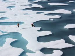 the average american melts 645 square feet of arctic ice per year