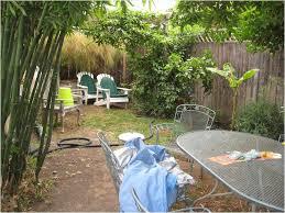 friendly backyard ideas without grass for dogs u thorplccom