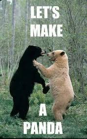 Coke Bear Meme - let s make a panda giantgag