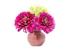 dalia in vaso fiore dentellare della dalia in vaso immagine stock immagine di