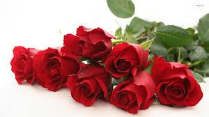 wallpaper flower red rose flowers red roses wallpaper 1404875