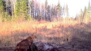 Michigan wildlife images Wildlife sightings in northern michigan jpg