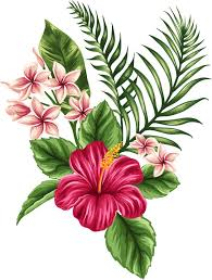 flower images tropical flower pictures best 25 tropical tattoo ideas on