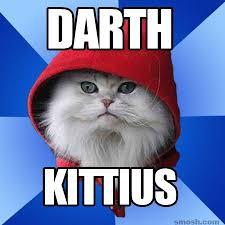 Star Wars Cat Meme - 150 star wars memes
