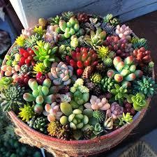 resume modernos terrarios suculentas propagation de sedum y echeverias soo cute cactus