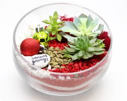 succulent terrarium in slope bowl christmas sand nashville events