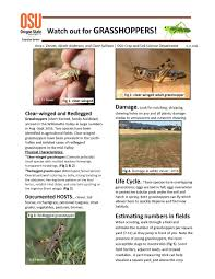 department of crop and soil science news crop and soil science