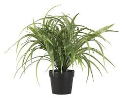 decorative potted ornamental grass clas ohlson