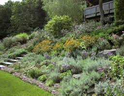 Slope Landscaping Ideas For Backyards by Hillside Landscaping Pinterest Landscaping Plants Shrub And