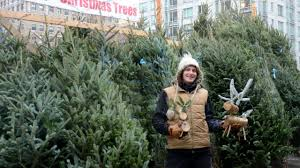 new york city christmas tree buying guide am new york