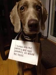 Bad Dog Meme - pic 6 bad dogs meme guy