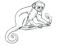 printable coloring pages monkeys printable monkey color pages baby monkey top free printable coloring