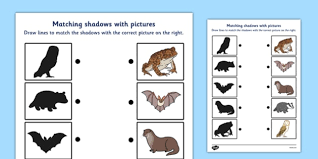 wild nocturnal animals shadow matching worksheet wild