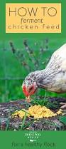 453 best chickens images on pinterest backyard chickens raising